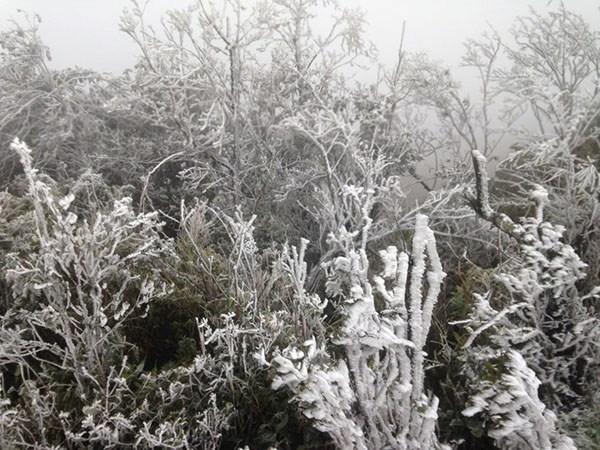 Cận cảnh băng giá phủ trắng đỉnh Mẫu Sơn ở nhiệt độ -1,4 độ C